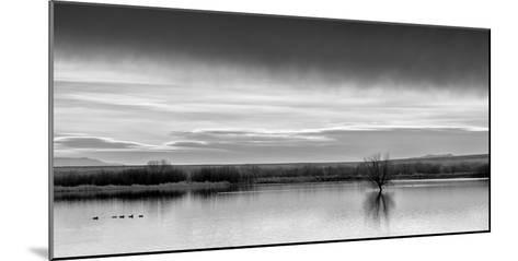 New Mexico, Bosque Del Apache National Wildlife Refuge-Ann Collins-Mounted Photographic Print