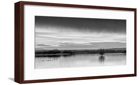 New Mexico, Bosque Del Apache National Wildlife Refuge-Ann Collins-Framed Art Print