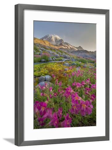 Washington, Lewis's Monkeyflower Along Panorama Trail and Paradise River, Mt. Rainier National Park-Gary Luhm-Framed Art Print
