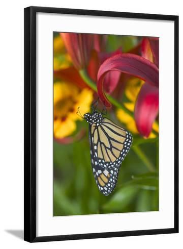 Monarch Butterfly-Darrell Gulin-Framed Art Print