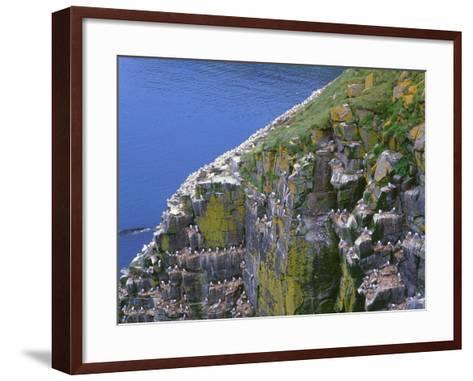 Newfoundland, Cape Saint Mary's Ecological Reserve-John Barger-Framed Art Print