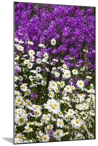 Washington, Palouse, Wildflowers Along the Country Backroad-Terry Eggers-Mounted Photographic Print