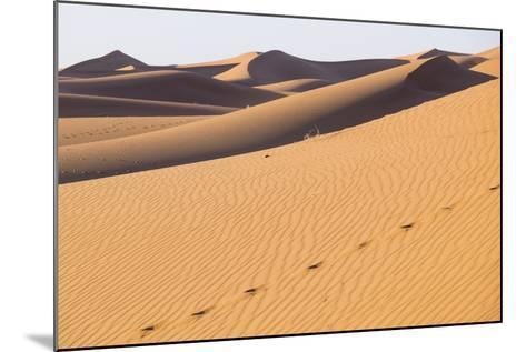 Morocco, Erg Chegaga Is a Saharan Sand Dune-Emily Wilson-Mounted Photographic Print