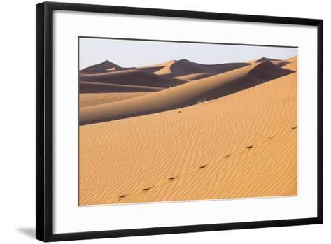 Morocco, Erg Chegaga Is a Saharan Sand Dune-Emily Wilson-Framed Art Print