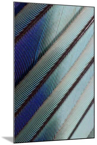 Lilac Breasted Roller Feathers Pattern-Darrell Gulin-Mounted Photographic Print