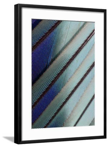 Lilac Breasted Roller Feathers Pattern-Darrell Gulin-Framed Art Print