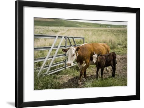 Palouse, Snake River Expedition, Pioneer Stock Farm, Cows at Pasture Gate-Alison Jones-Framed Art Print