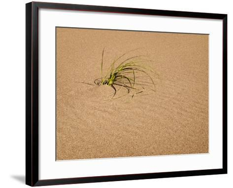 USA, Colorado, Great Sand Dunes National Park and Preserve. Blowout Grass Grows on a Dune-Ann Collins-Framed Art Print