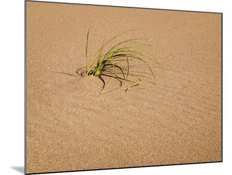 USA, Colorado, Great Sand Dunes National Park and Preserve. Blowout Grass Grows on a Dune-Ann Collins-Mounted Photographic Print