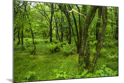 Lush Green Forest in the Hallasan National Forest, Jejudo Island, South Korea-Michael Runkel-Mounted Photographic Print