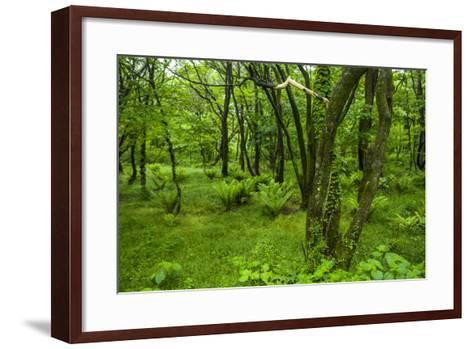 Lush Green Forest in the Hallasan National Forest, Jejudo Island, South Korea-Michael Runkel-Framed Art Print