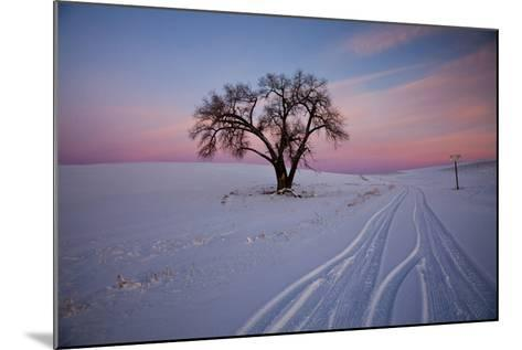 Washington, Sunset Bathed Lone Tree in Snow Covered Winter Field-Terry Eggers-Mounted Photographic Print