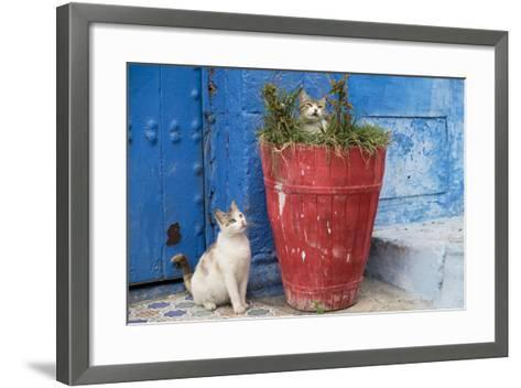 Morocco, Rabat, Sale, Kasbah Des Oudaias, Cats Hanging Out by a Potted Plant-Emily Wilson-Framed Art Print