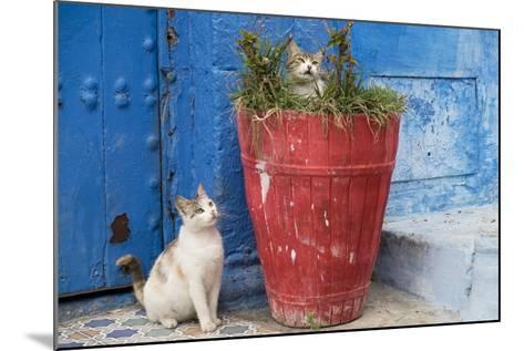 Morocco, Rabat, Sale, Kasbah Des Oudaias, Cats Hanging Out by a Potted Plant-Emily Wilson-Mounted Photographic Print