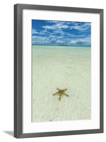 Sea Star in the Sand on the Rock Islands, Palau, Central Pacific-Michael Runkel-Framed Art Print