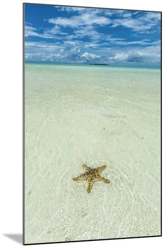 Sea Star in the Sand on the Rock Islands, Palau, Central Pacific-Michael Runkel-Mounted Photographic Print