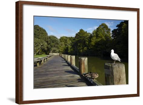 Seagull on Boardwalk by Mahurangi River, Warkworth, Auckland Region, North Island, New Zealand-David Wall-Framed Art Print