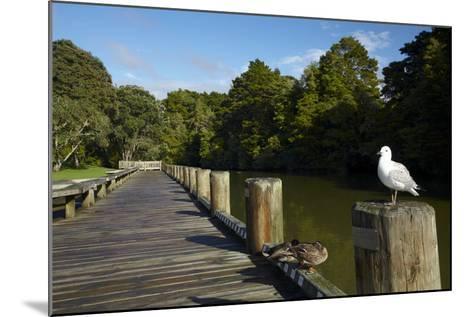Seagull on Boardwalk by Mahurangi River, Warkworth, Auckland Region, North Island, New Zealand-David Wall-Mounted Photographic Print