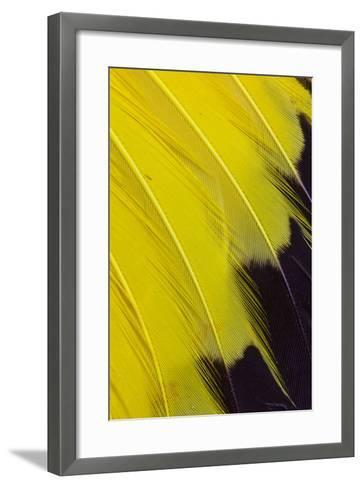 Wing Feathers of Yellow Rumped Cacique-Darrell Gulin-Framed Art Print