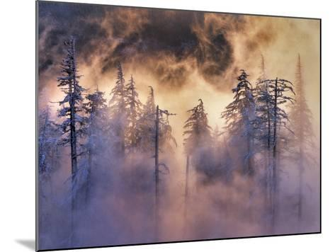 USA, Oregon, Mt Hood National Forest. Evergreens in Fog-Jaynes Gallery-Mounted Photographic Print
