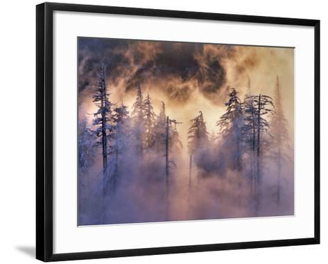USA, Oregon, Mt Hood National Forest. Evergreens in Fog-Jaynes Gallery-Framed Art Print
