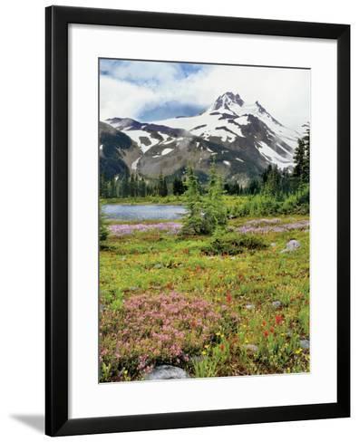 USA, Oregon, Mt Jefferson Wilderness. Mount Jefferson and Field of Wildflowers-Jaynes Gallery-Framed Art Print