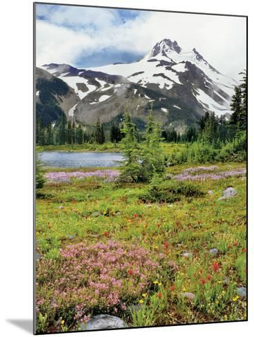 USA, Oregon, Mt Jefferson Wilderness. Mount Jefferson and Field of Wildflowers-Jaynes Gallery-Mounted Photographic Print