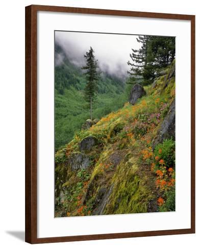 USA, Oregon, Mt Hood National Forest. Hillside Landscape in Fog-Jaynes Gallery-Framed Art Print
