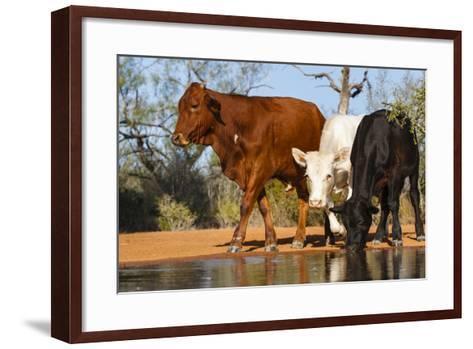 Cattle Drinking-Larry Ditto-Framed Art Print