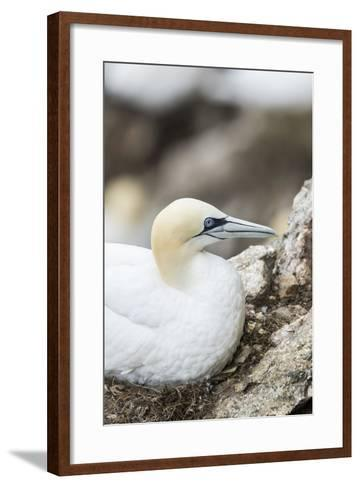 Scotland, Shetland Islands-Martin Zwick-Framed Art Print