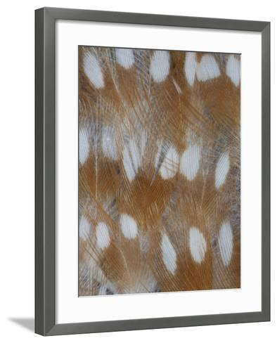 Zebra Finch Feathers of a Fawn Mutation in Coloration-Darrell Gulin-Framed Art Print