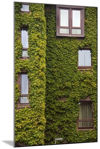 Norway, Bergen. Bryggen Building with Ivy-Kymri Wilt-Mounted Photographic Print