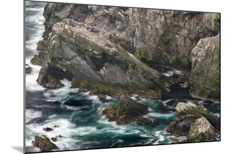 Hermaness National Nature Reserve on the Island Unst. Colony of Northern Gannet-Martin Zwick-Mounted Photographic Print