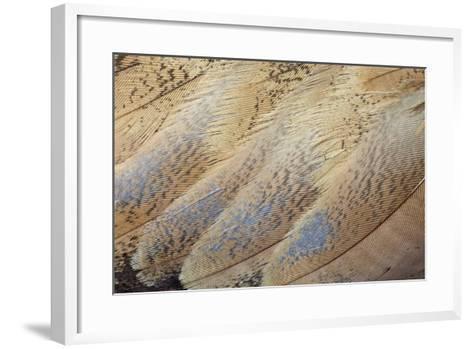 Senegal Bustard Close-Up of Feathers-Darrell Gulin-Framed Art Print