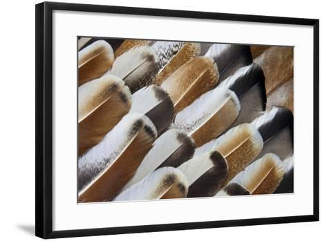 Turkey Wing Feathers Fanned Out-Darrell Gulin-Framed Art Print