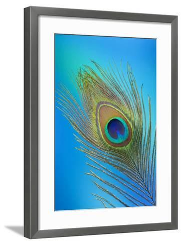 Single Male Peacock Tail Feather Against Colorful Background-Darrell Gulin-Framed Art Print