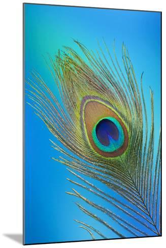 Single Male Peacock Tail Feather Against Colorful Background-Darrell Gulin-Mounted Photographic Print