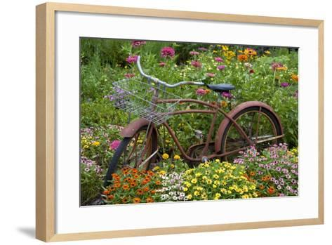 Old Bicycle with Flower Basket in Garden with Zinnias, Marion County, Illinois-Richard and Susan Day-Framed Art Print
