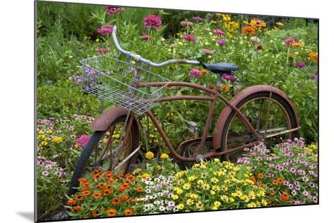 Old Bicycle with Flower Basket in Garden with Zinnias, Marion County, Illinois-Richard and Susan Day-Mounted Photographic Print