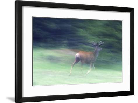 Canada, Alberta, Jasper National Park. Mule Deer Running-Jaynes Gallery-Framed Art Print