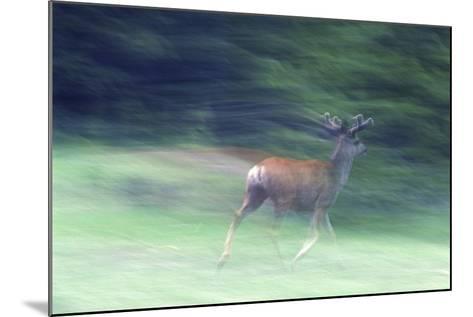 Canada, Alberta, Jasper National Park. Mule Deer Running-Jaynes Gallery-Mounted Photographic Print