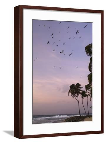Coconut Palm and Magnificent Frigatebird, Half Moon Caye, Lighthouse Reef, Atoll, Belize-Pete Oxford-Framed Art Print