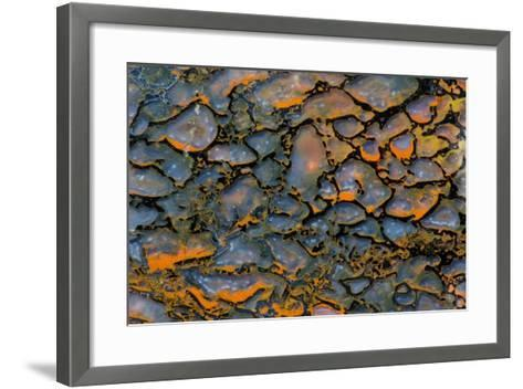 Dinosaur Petrified Bone-Darrell Gulin-Framed Art Print