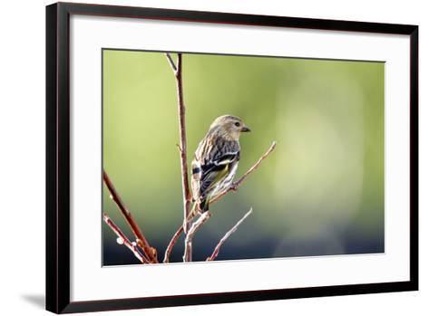 A Pine Sisken-Richard Wright-Framed Art Print