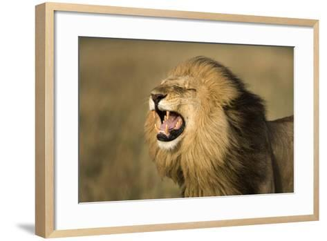 Africa, Kenya, Masai Mara Game Reserve. Male Lion Roaring-Jaynes Gallery-Framed Art Print