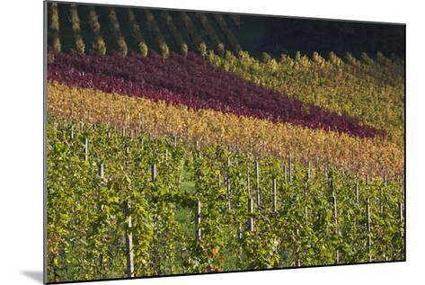 Germany, Baden-Wurttemburg, Black Forest, Gengenbach, Hillside Vineyards, Fall-Walter Bibikow-Mounted Photographic Print