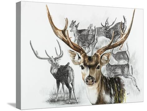 Axis Deer-Barbara Keith-Stretched Canvas Print