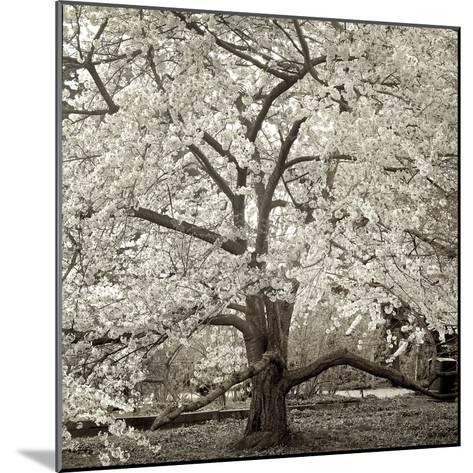 Hamption Magnolia II-Alan Blaustein-Mounted Photographic Print