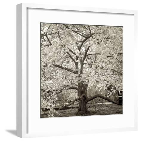Hamption Magnolia II-Alan Blaustein-Framed Art Print
