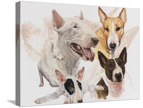 Bull Terrier with Ghost Image-Barbara Keith-Stretched Canvas Print